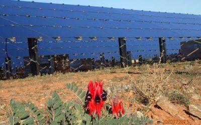 AGL_broken_hill_solar_farm